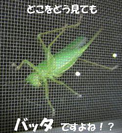 バッタやんか!!